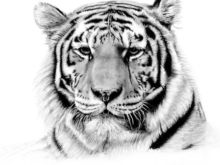 Tiere zeichnen - neuer Kurs in Entstehung