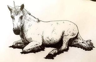 ultrasound unicorn