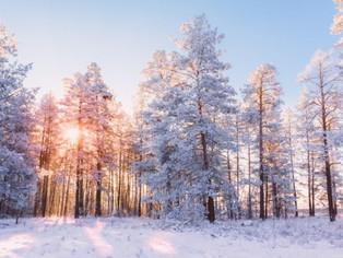 Ja tenim aquí el solstici d' hivern. La tardor queda enrere, comença l'hivern 2020-2021