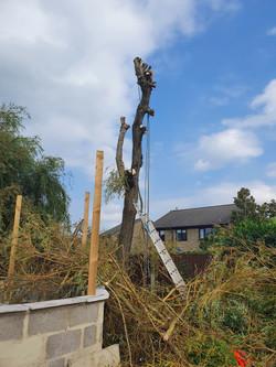 Tree growth enhancement