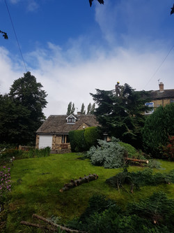 Tree care and maintenance