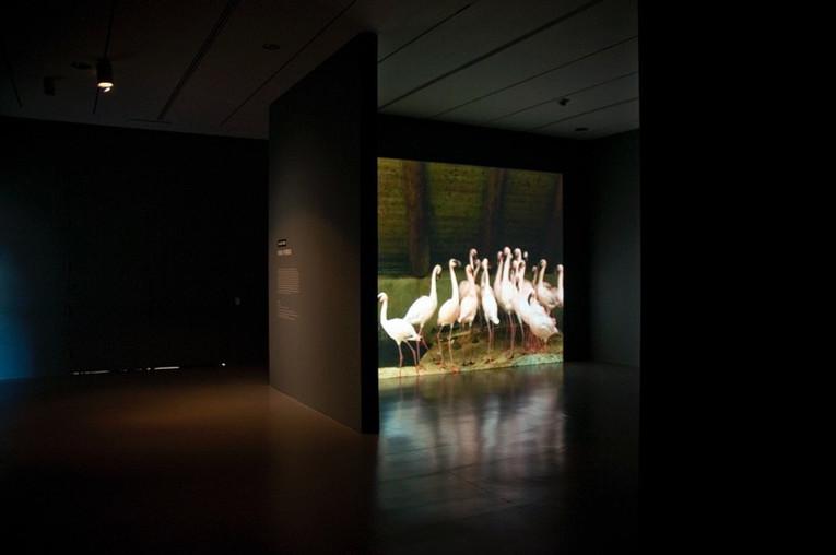 "67 BOWS on View at ""Black Box"" Hirshhorn Museum,Smithsonian Institution, Washington, USA. 2011"