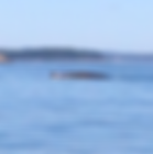 whale watch from Lubec
