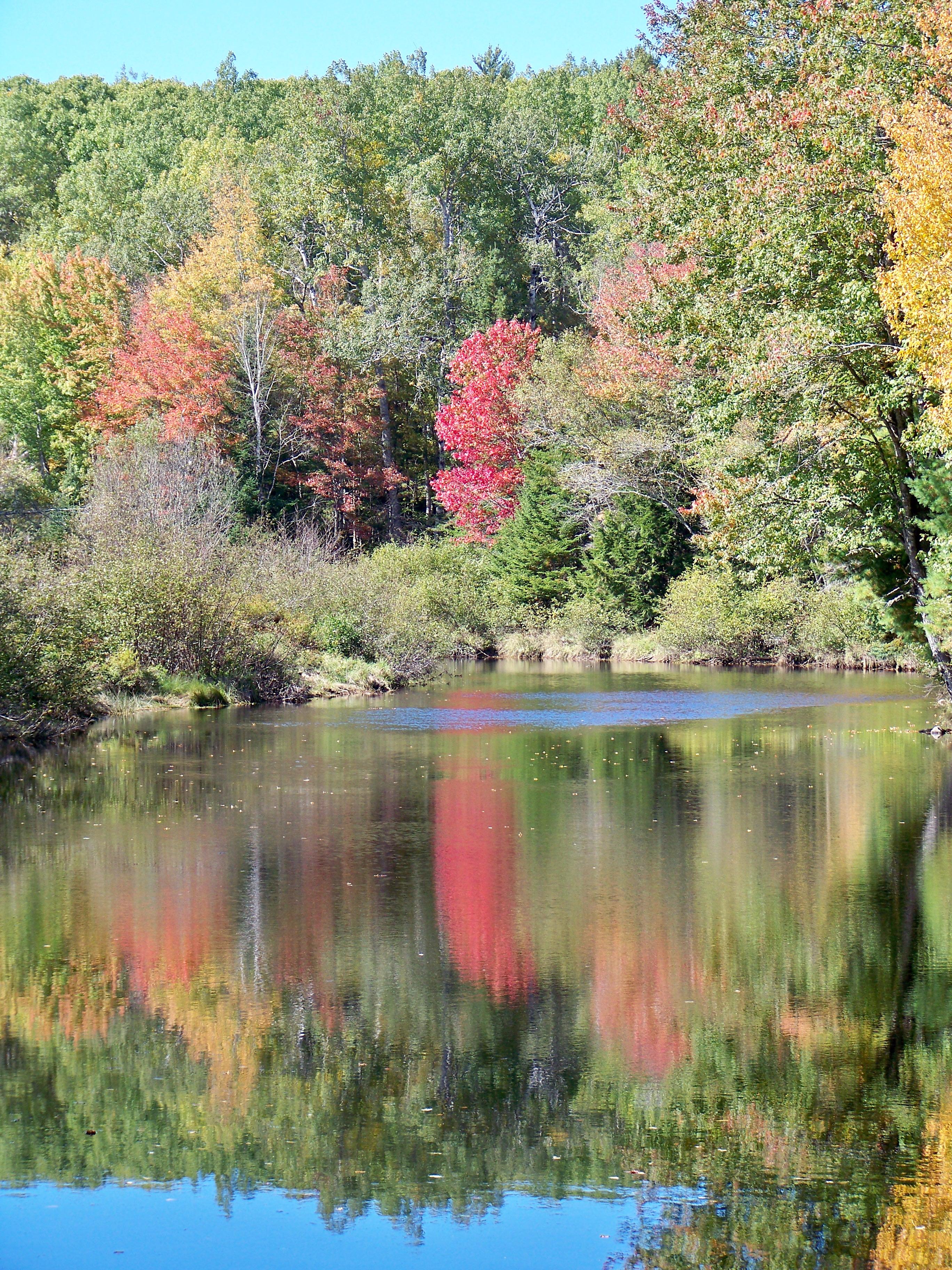 Robinson's pond
