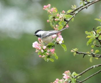 If you are an avid bird watcher.....
