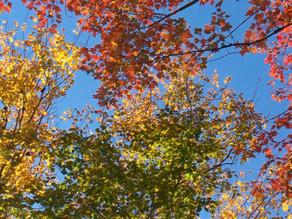2016 Fall Foliage