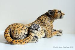 Cheetah Lying Down
