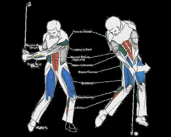 Golf TPI Physical Performance Assessment