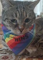 IsaBella Pride - Julie Oh.jpg