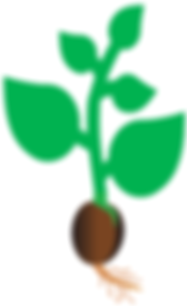 seed library image.png