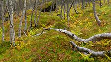 Autumn wood thmb.jpg