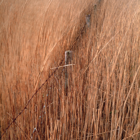 Into the reeds