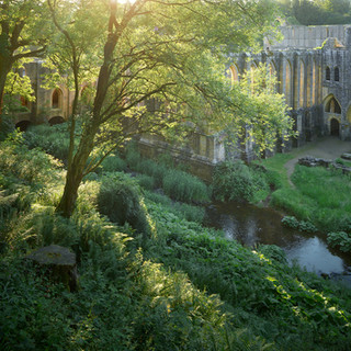 Into the light, Fountains Abbey ruins