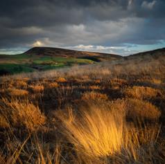 Moorland autumn