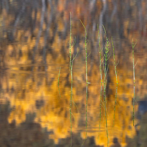 Horsetail and reflections.jpg