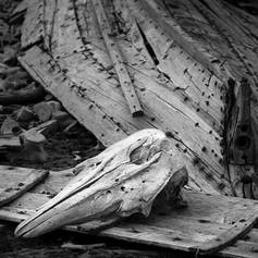 Beluga ossuary