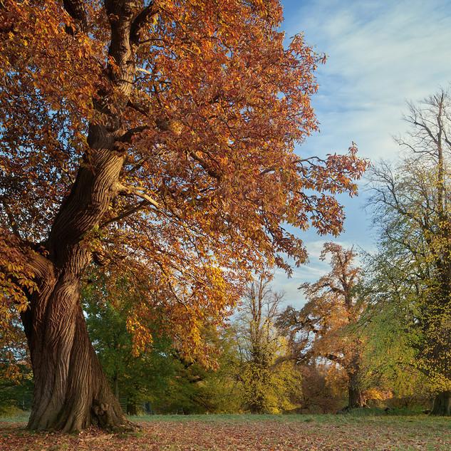 The Deer Park, Fountains Abbey