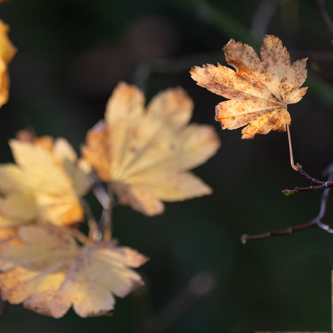 The end of autumn 2
