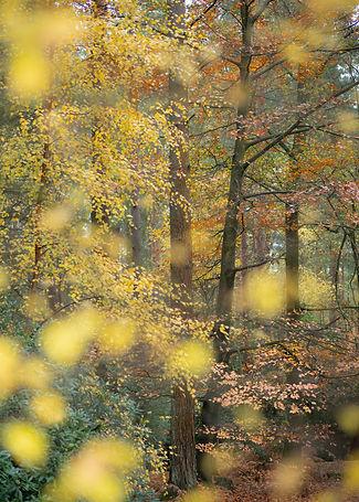 Midhurst Common.jpg