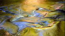 Golden reflections thmb.jpg