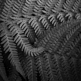 Distorted fractal
