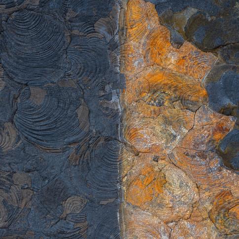 Fossil fold