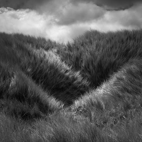 Holy Island dunes