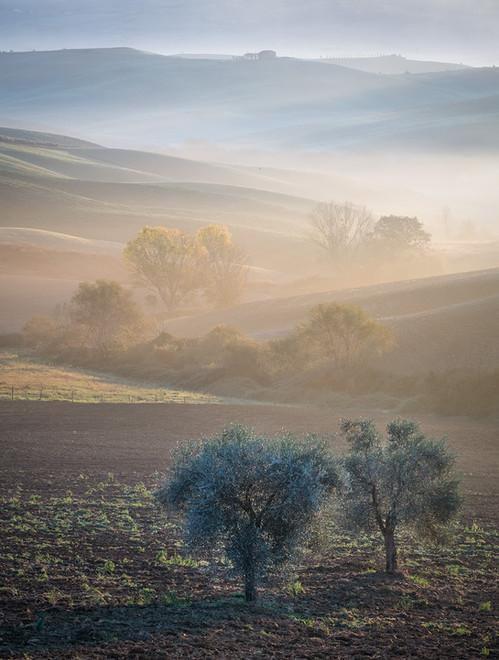 Olive tree dawn 1600.jpg