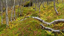 Autumn wood pano.jpg