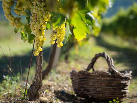 Masterclass - Diversidade dos vinhos do Novo e Velho Mundo