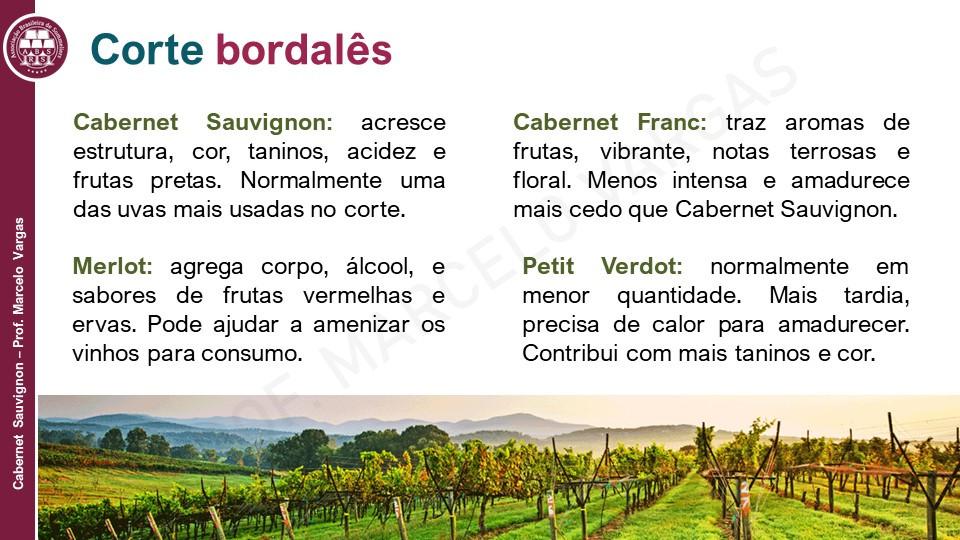 A Cabernet Sauvignon é uma das uvas autorizadas nos vinhos tintos de Bordeaux (Imagem: Porf. Marcelo Vargas)