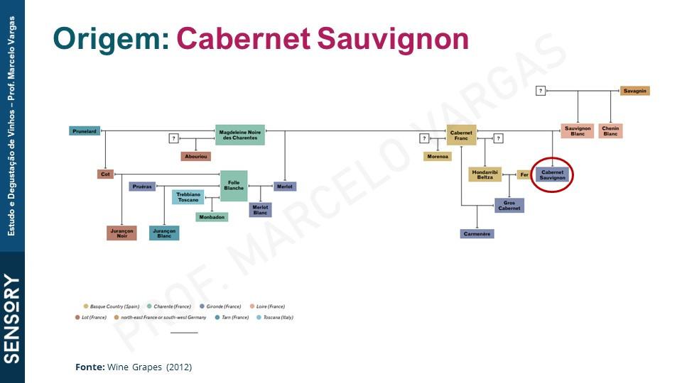 A uva Cabernet Sauvignon tem origem na França (crédito: Prof. Marcelo Vargas)