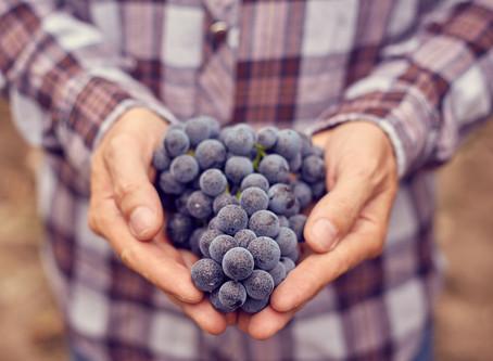 Curso inédito da ABS-RS sobre uvas viníferas já tem inscritos de 11 estados do país