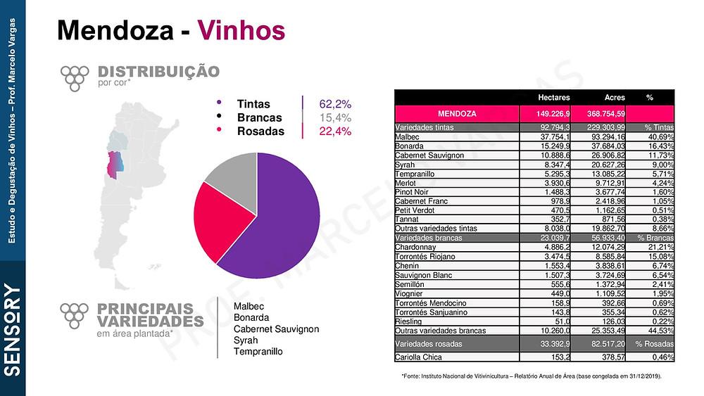 Malbec é a uva de de maior destaque e volume de Mendoza