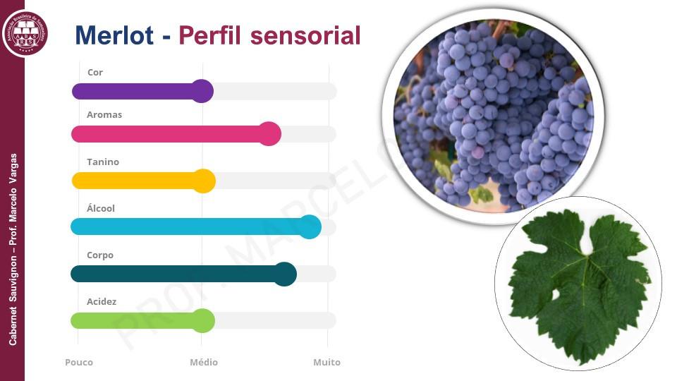 Os vinhos de Merlot podem complementar os Cabernet  Sauvignon (Imagem: Prof. Marcelo Vargas)