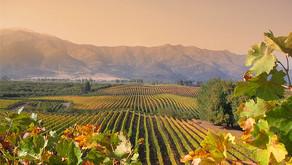 Viagem Chile - Vinhos e Gastronomia