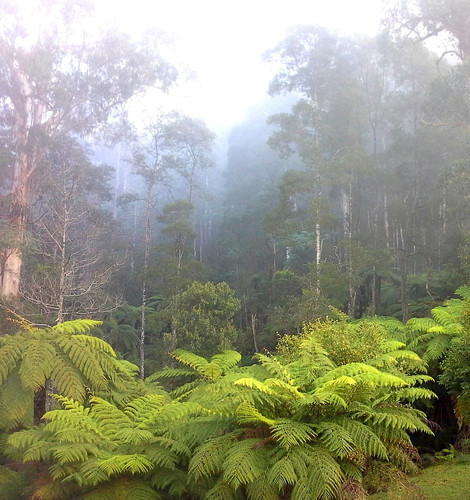 Australian Cool Temperate Forest