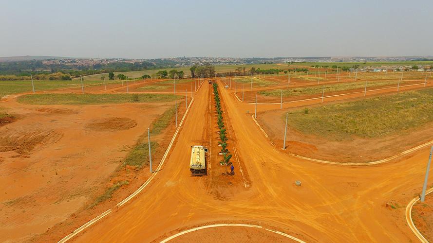 Plantio de Palmeiras