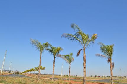 Jardim Manacá Agosto (6).png