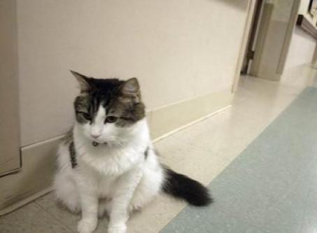 Alzheimer: A história do gato que previu com exatidão a morte de 100 pessoas em uma instituição