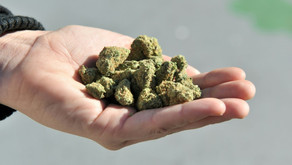 Alzheimer: Cannabis Medicinal tem se mostrado eficaz para cuidados paliativos da doença