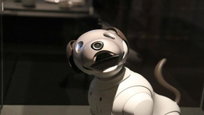 Alzheimer: Bichinhos robôs chegam ao Brasil para ajudar idosos com Alzheimer
