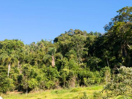 Farsul emite Nota Técnica sobre aplicação do Código Florestal ao Bioma Mata Atlântica