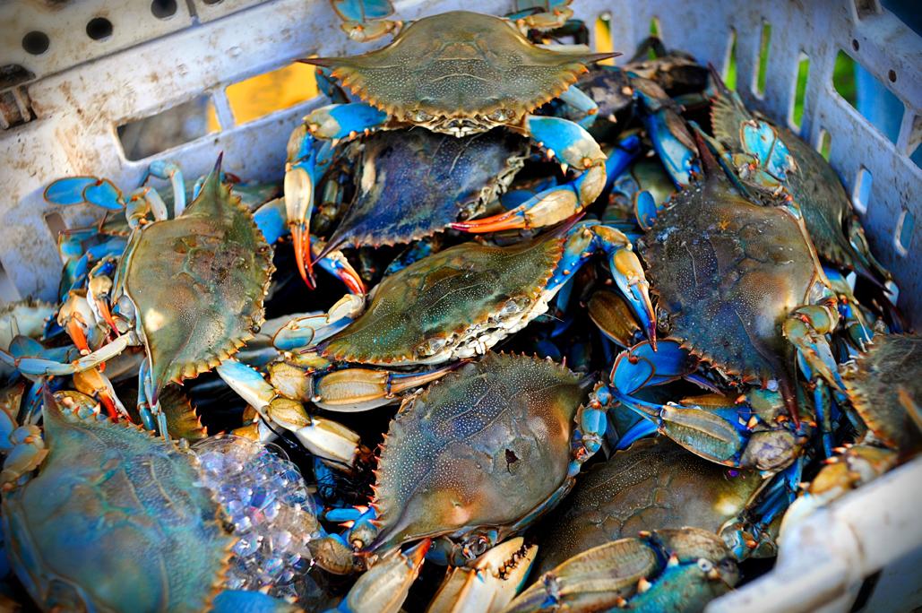 Crabbing_e594881f-b41c-6985-96c4876715b133ec