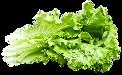 AlumniFood lettuce