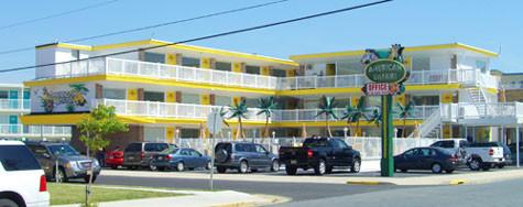 American Safari Motel