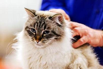 cat-grooming-footer1.jpg