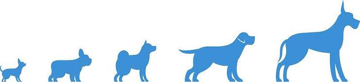 dog-grooming-header.jpg