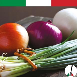 Onion from Medicina