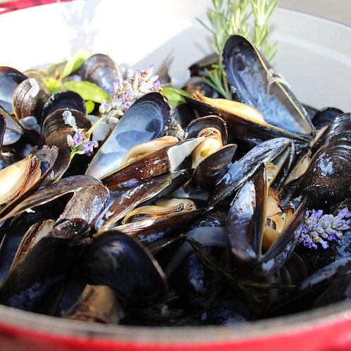 Live Penn Cove Pacific Mussels - 3 lbs